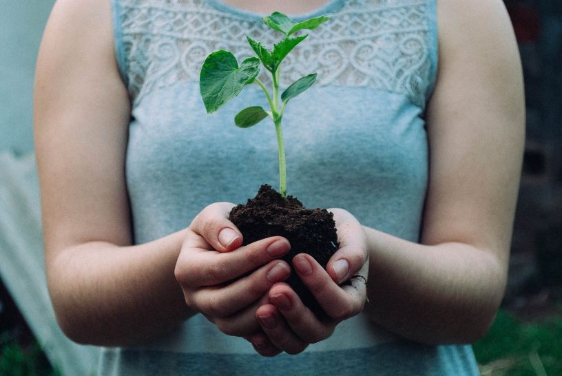 Woman holding small plant in her hands
